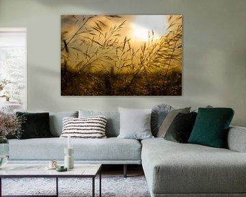 Zonsondergang over een Tarweveld von Vincent van den Hurk