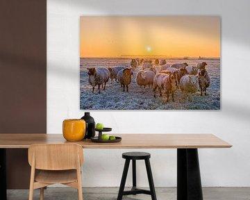 Schapen in de winter / Sheep in the winter von Wim Kanis
