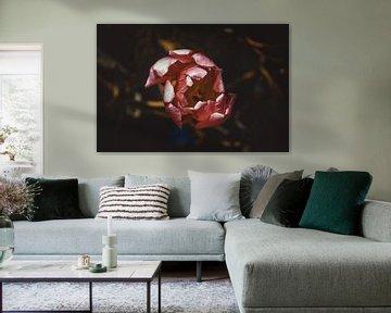 Die einsame Tulpe von Stedom Fotografie