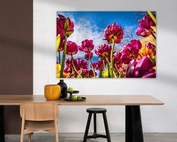 Stralende paarse tulpen von Stedom Fotografie