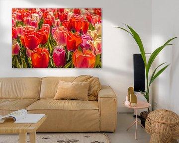 Veld vol gekleurde tulpen von Stedom Fotografie
