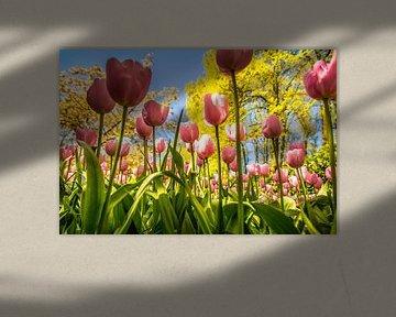 Prachtige roze tulpen von Stedom Fotografie