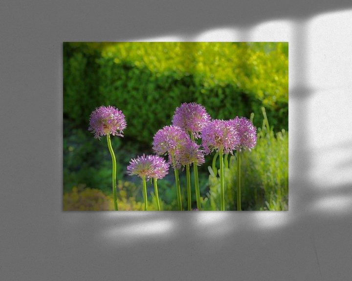 Sfeerimpressie: Groepje Allium bloemen van Ronald Smits