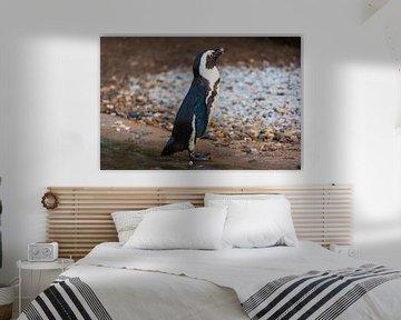 Pinguin geniet van de zon