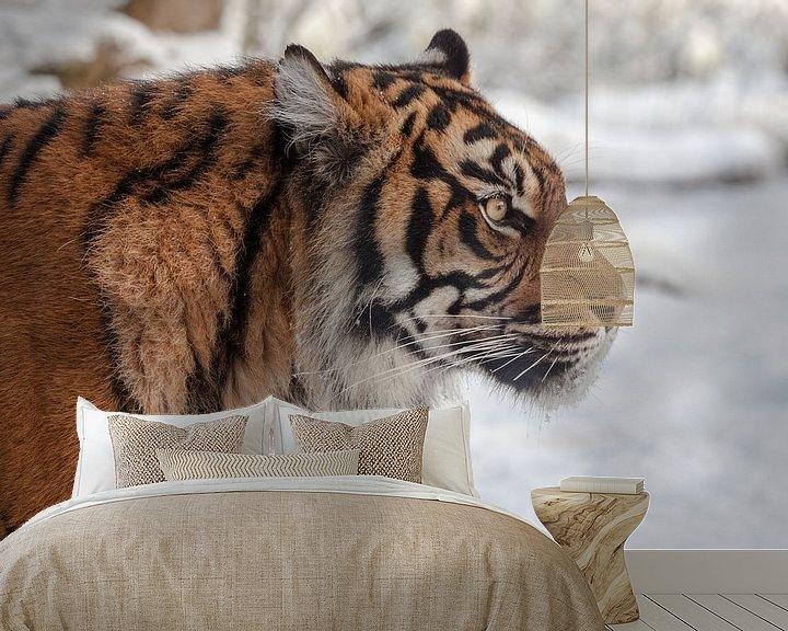 Beispiel fototapete: Side Porträt eines Sumatra Tiger im Schnee von Tim Abeln