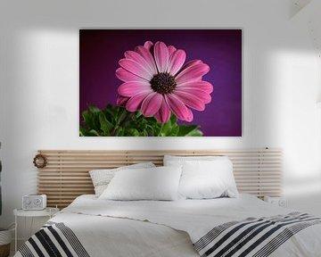 Margriet, bloem von Mark Rademaker