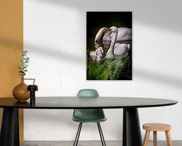Eine kleine Familie Schwäne von Pascal Raymond Dorland