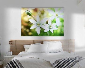 Dream flowers von Michelle Zwakhalen