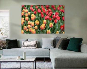 Tulpen von Ronne Vinkx