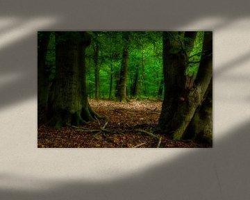 Un autre jour dans la forêt sur Tim Abeln