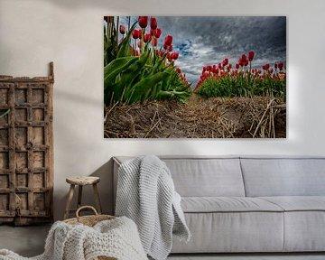 Tulpenveld Sint Maartensvlotbrug von Manuel Speksnijder