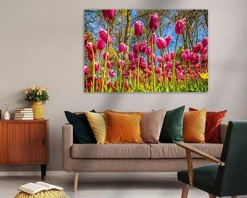 Bunte violette Tulpen von Stedom Fotografie