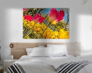 Großes Feld voller Tulpen von Stedom Fotografie
