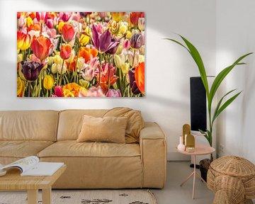 Bunte Tulpen von Stedom Fotografie