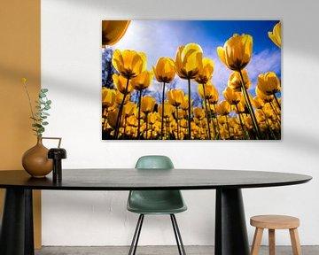 Een veld vol gele tulpen van Stedom Fotografie