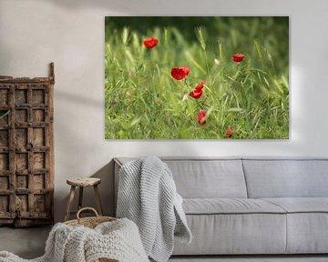 Poppy's von Marcel Hondeveld