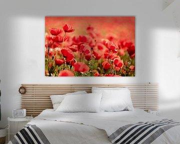 all red...poppies! von Els Fonteine