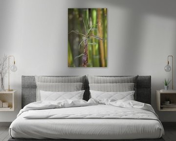 Bamboe von Roberto Zea Groenland-Vogels