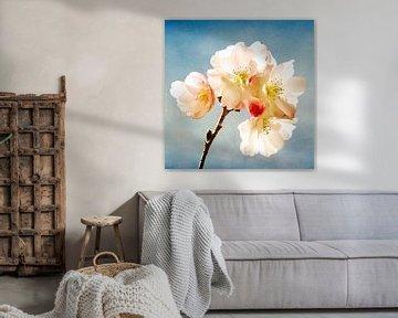 Blossom Up van Lars van de Goor