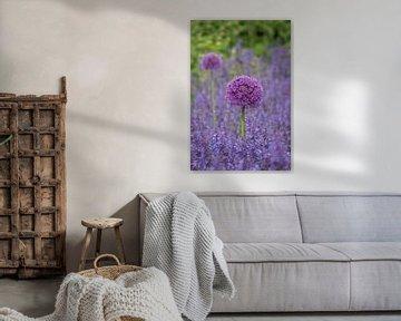 Allium, een sierui von Yvonne van der Meij