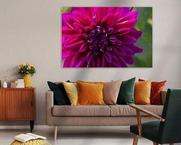 Flower 4 von Eugene Klinkenberg