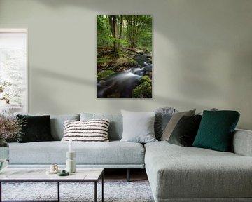 Fairytale Forest van Dion van den Boom