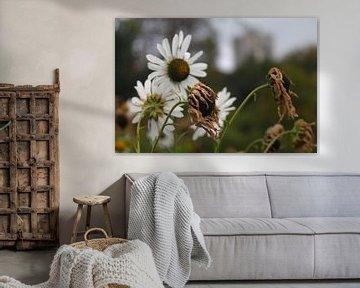 Bloemen in de herfst von Isabel van Esch