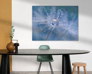 Löwenzahn-Flöckchen (Farbe Blau) 2 von Caroline Lichthart