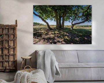 Schaduwboom in NP Maasduinen