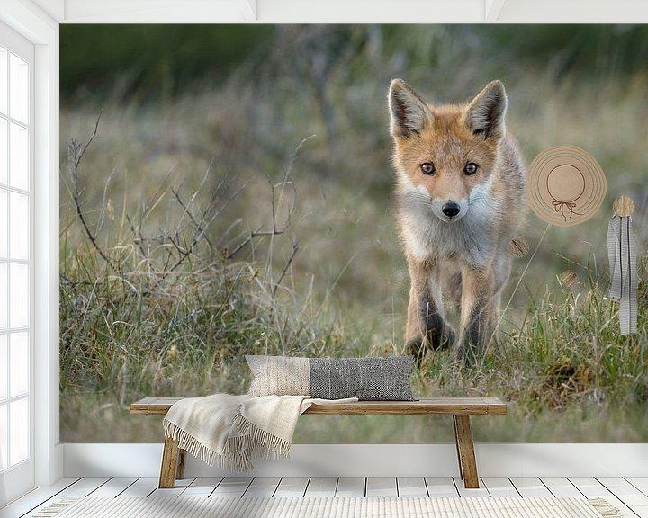 Beispiel fototapete: Red fox cub von Menno Schaefer