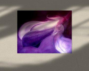 Paars/zwart - Purple Black von Christoph Van Daele