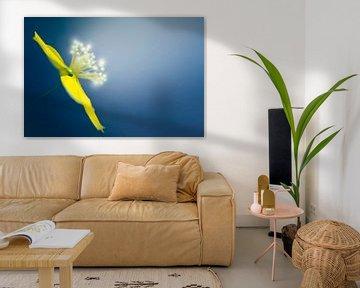 Makro der gelben Blume auf blauem Hintergrund