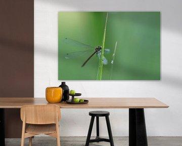 Libelle op grasspriet  von eusphotography