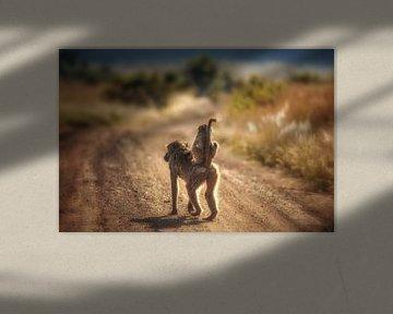 Baviaan met jong op de weg van De Afrika Specialist