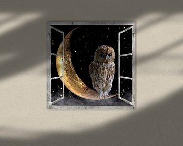 Fensterblick - Nachteule von Christine Nöhmeier
