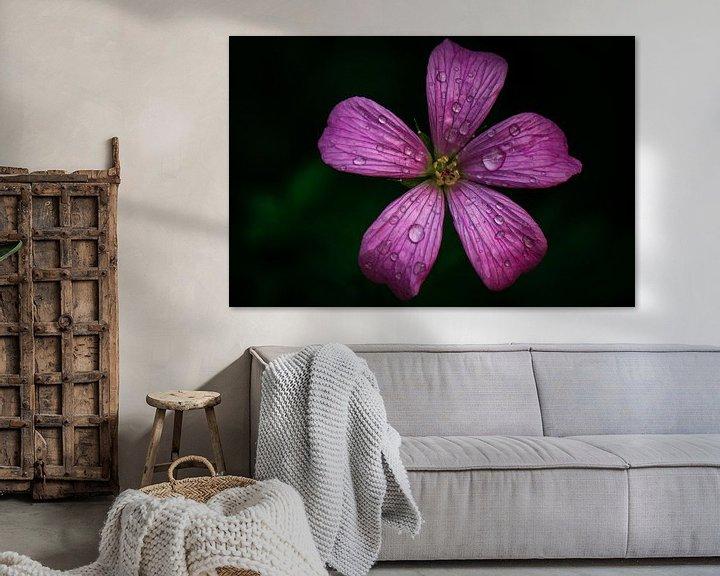 Sfeerimpressie: Kleine geranium van Lily Ploeg