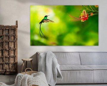 Kolibrie benaderd bloem van BeeldigBeeld Food & Lifestyle