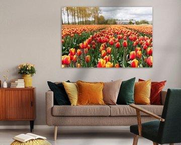 Tulpen in de Noordoostpolder von Petra Cremers