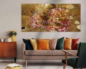 Kerstboom wormen tussen het koraal van M&M Roding