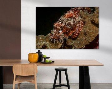 Schorpioenvis verstopt op een koraalrif van M&M Roding
