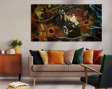 Zoek de frogfish van M&M Roding