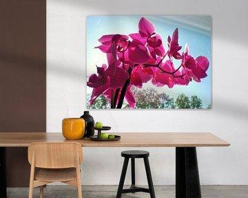 Paarse orchideeën von Pictures Of Nature