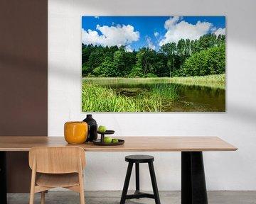 Landschaft mit Teich und Bäumen von Rico Ködder