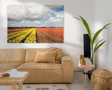 Gele en oranje bloeiende tulpen in een rij van Maurice de vries