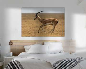 Gazelle van Ronne Vinkx