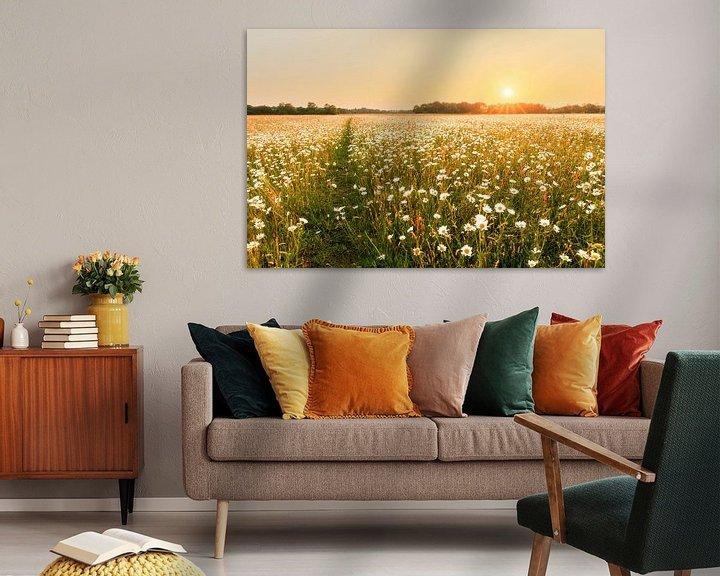 Sfeerimpressie: Zonovergoten margrietenveld van Karla Leeftink