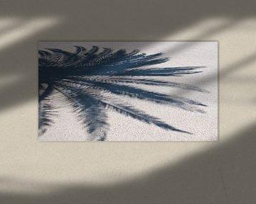 Palm shadow van Arthur Wijnen