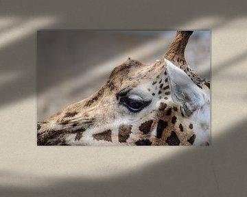 Close-up van een Giraffe von Lisanne Bosch