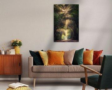 Angel of light van Edwin Mooijaart