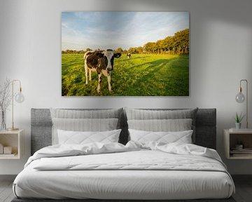 Koe in Nederlands weiland  von Kaj Hendriks